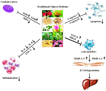 the effect of traditional chinese medicine Traditional chinese medicine in the treatment of symptoms in patients with advanced cancer clinical effect of integrative medicine therapy on gastroenteric reaction induced by dou yq, feng y, gao lp traditional chinese medicine treatment for gastrointestinal reaction induced by.